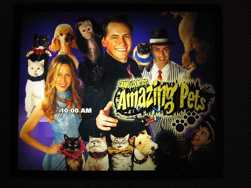 amazing-pets.jpg
